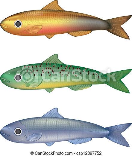 Ilustración de vector de pescado colorido - csp12897752