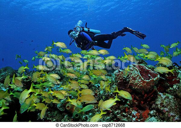 Buzo y escuela de peces - csp8712668