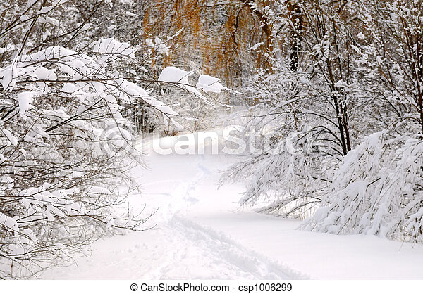 pfad, wald, winter - csp1006299