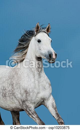 Arabisches Pferd - csp10203875