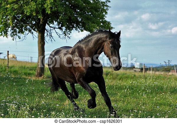 pferd - csp1626301