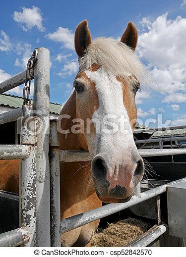pferd - csp52842570