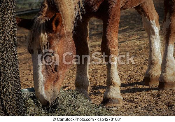 Pferd - csp42781081
