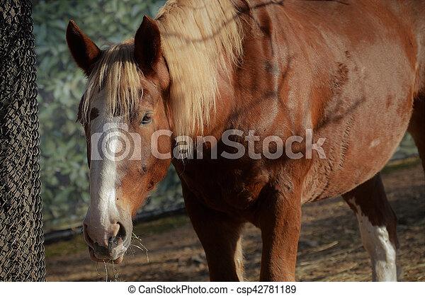 pferd - csp42781189