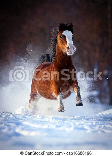 Bay Horse galoppiert im Winter - csp16680196