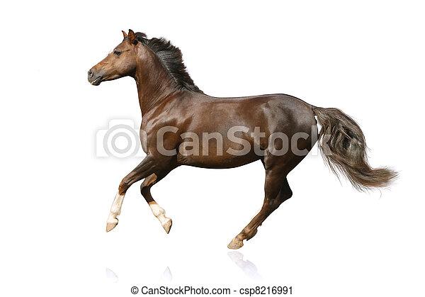 pferd, freigestellt - csp8216991