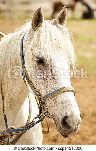 pferd, grau - csp14513326