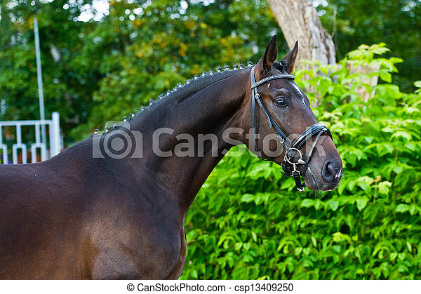 pferd, hengst, -, grüner hintergrund, züchter - csp13409250