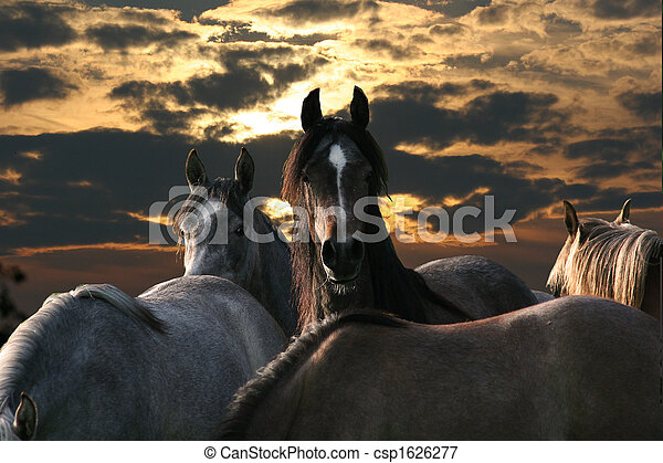 Pferdeherde - csp1626277