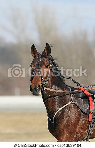 Harness Rennpferd - csp13839104