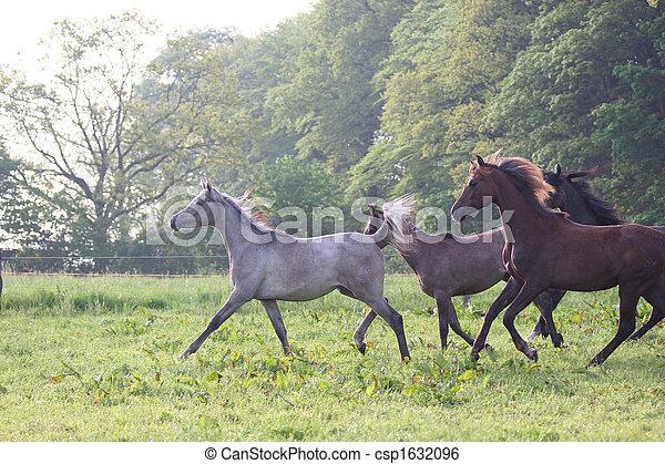 Pferderennen - csp1632096