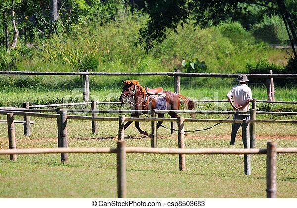 pferd, rennender  - csp8503683