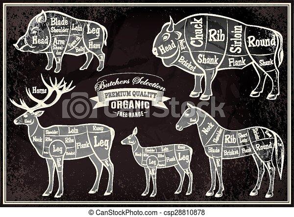 Pferd, schnitt, diagramm, hirsch, vektor, leichen, bison ...