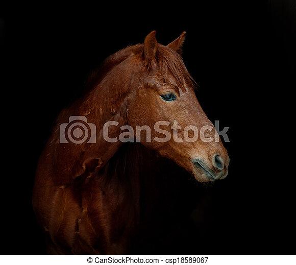 Pferd auf Schwarz - csp18589067