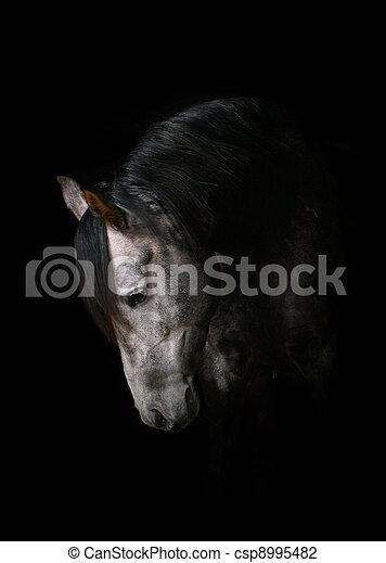 pferd, schwarz - csp8995482