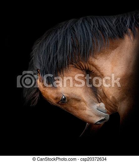 Pferd auf Schwarz - csp20372634