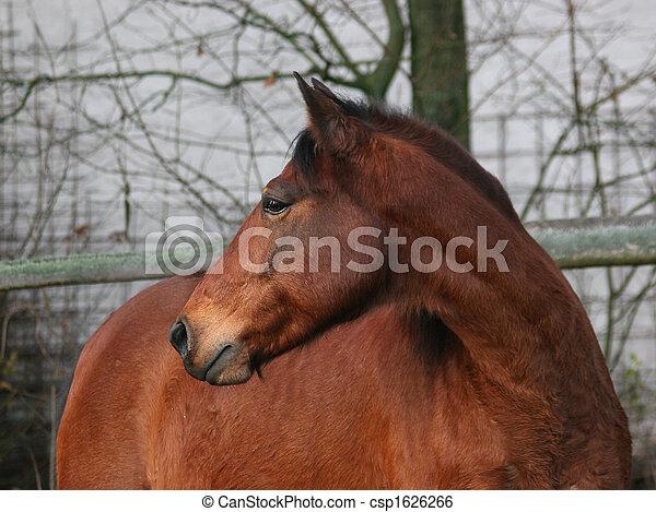Pferd - csp1626266