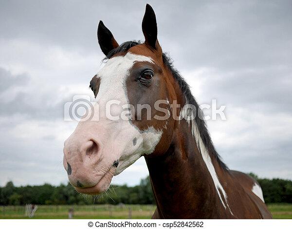 pferd - csp52842562