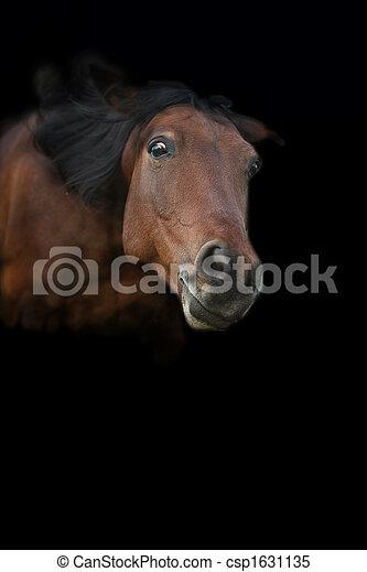 Pferd - csp1631135