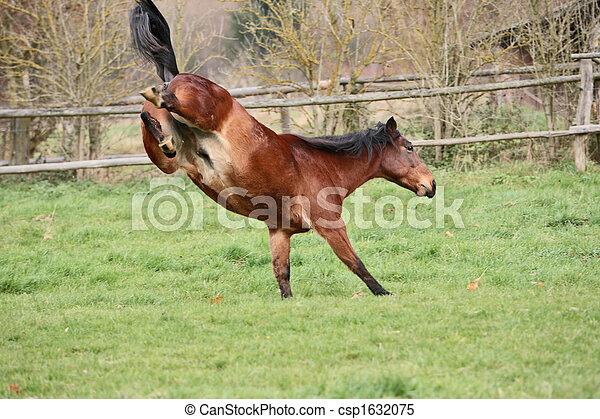 pferd - csp1632075