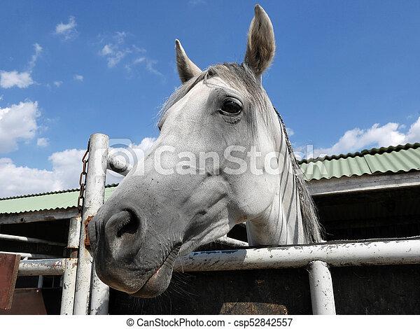 Pferd - csp52842557