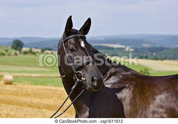 Pferd - csp1611612