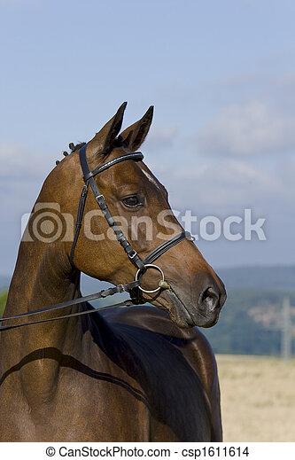pferd - csp1611614