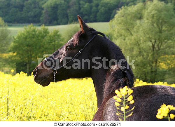 Pferd - csp1626274