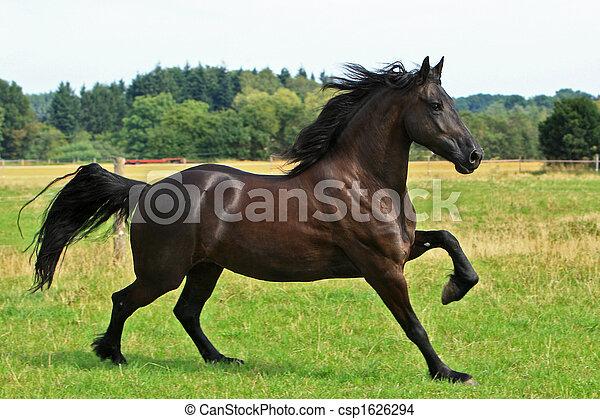 Pferd - csp1626294