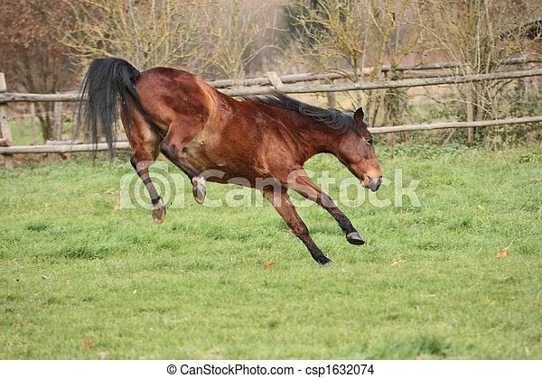 Pferd - csp1632074