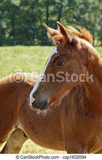 pferd - csp1632094