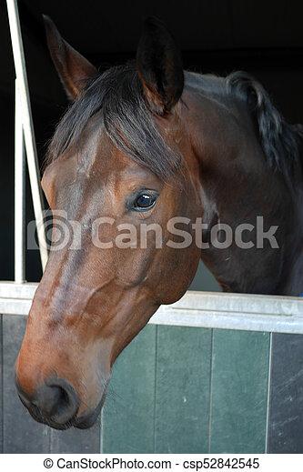 Pferd - csp52842545