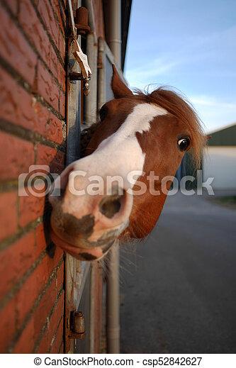 Pferd - csp52842627