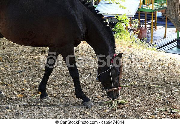 pferd - csp9474044