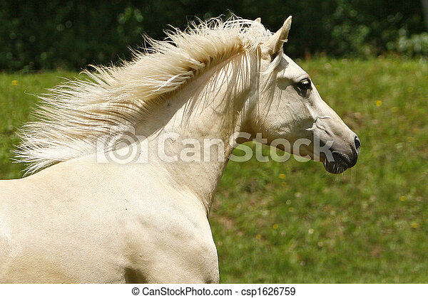 pferd - csp1626759