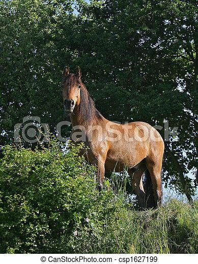pferd - csp1627199