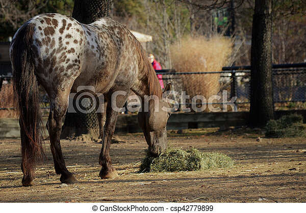 Pferd - csp42779899