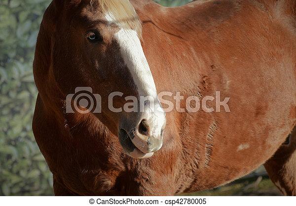 Pferd - csp42780005
