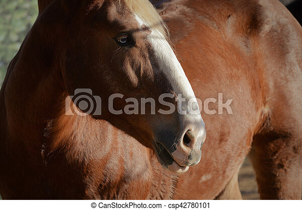 pferd - csp42780101