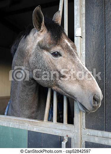 Pferd - csp52842597