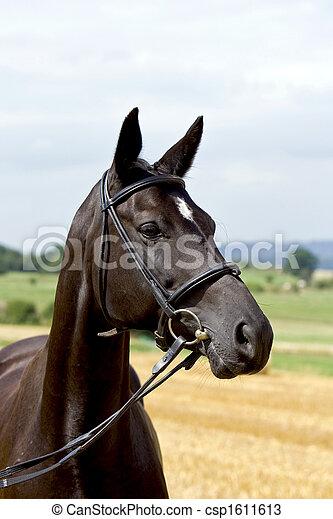 Pferd - csp1611613