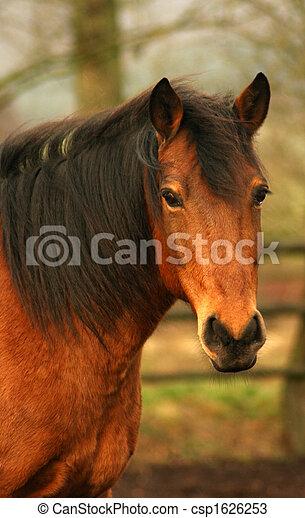 pferd - csp1626253