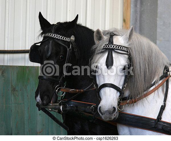 Pferd - csp1626263