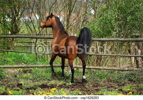 Pferd - csp1626283