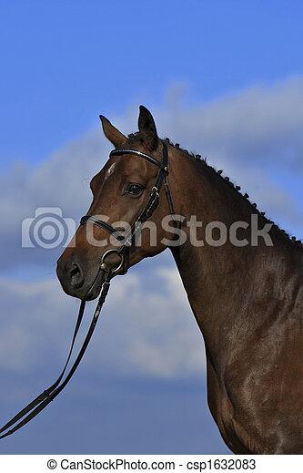pferd - csp1632083