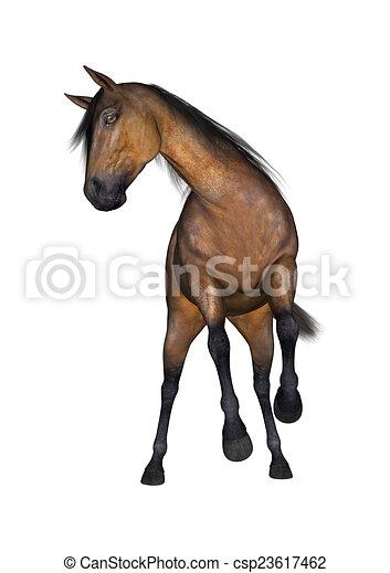 Pferd 3d Ansehen