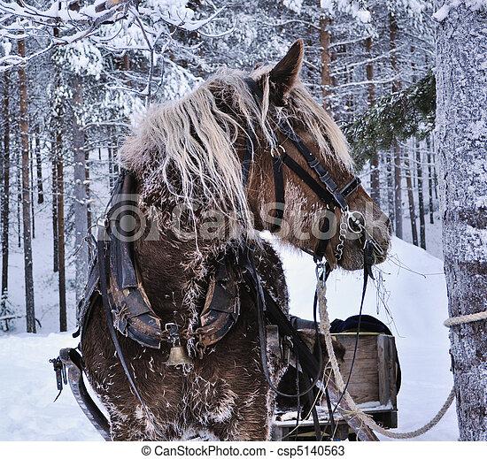 pferd weihnachten nord pferd skandinavien markt. Black Bedroom Furniture Sets. Home Design Ideas