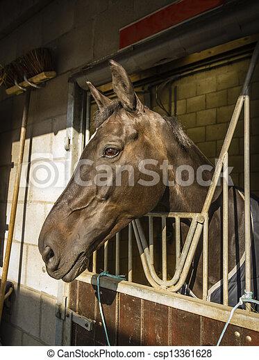 Pferd in der Kabine - csp13361628