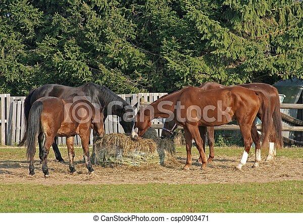 pferden - csp0903471
