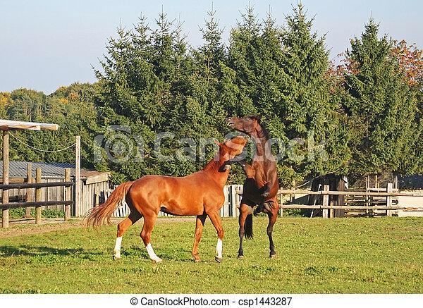pferden, kämpfen - csp1443287